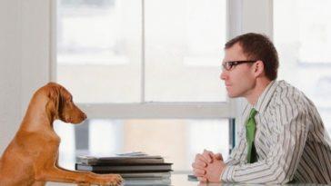 Llevar a tu perro o mascotas a tu oficina puede traerte beneficios terapéuticos
