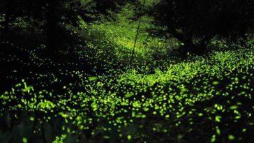 Santuario de Luciérnagas en Tlaxcala, millones de luces volando sobre tu cabeza