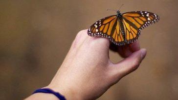 Mapa y ubicación de santuarios para ver mariposas monarca en México