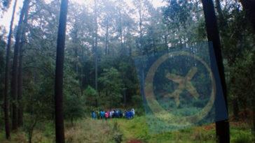 conoce bosque luciernagas tlaxcala