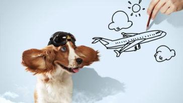 tips para viajar perro mascota petfriendly