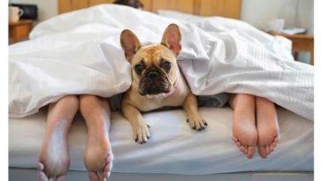 hoteles petfriendly viajar mascotas