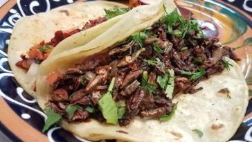 que insectos se comen en mexico