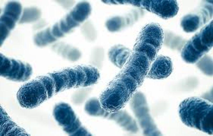 lactobacilos para fortalecer el sistema inmunológico