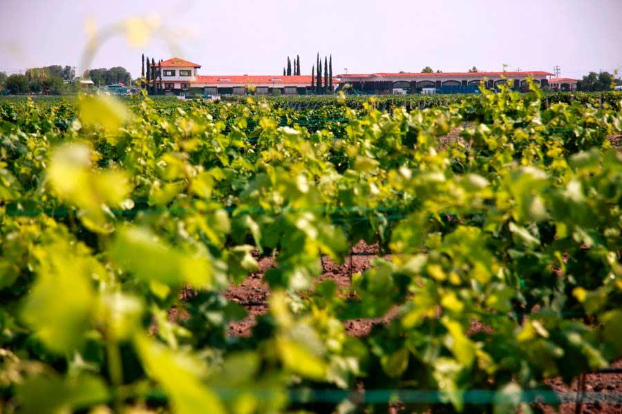 Ruta del vino Querétaro Sala Vivé