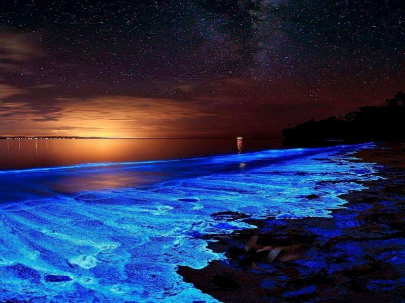 ¿Qué es la Bioluminiscencia?