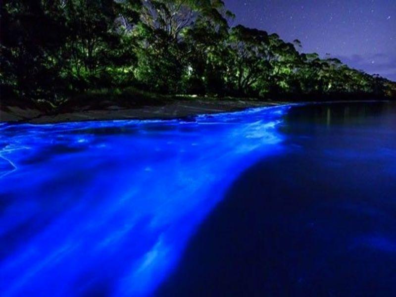 "Laguna de Manialtepec bioluminiscencia ""Lugar de Lagartos"""