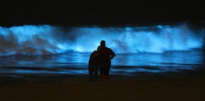 Playas bioluminiscentes en México